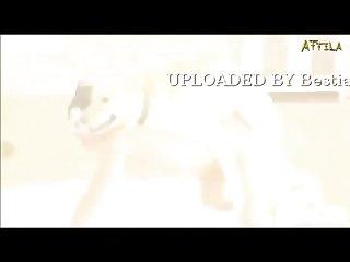 Puppy Love A Rock Tribute Bmv (part 2)